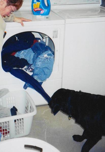 Service Dog Doing Laundry